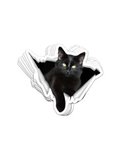 Black Cat Crack Sticker